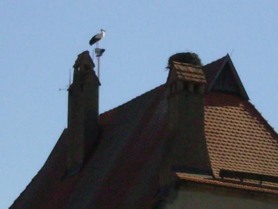 der Storch auf seinem  Ausguck