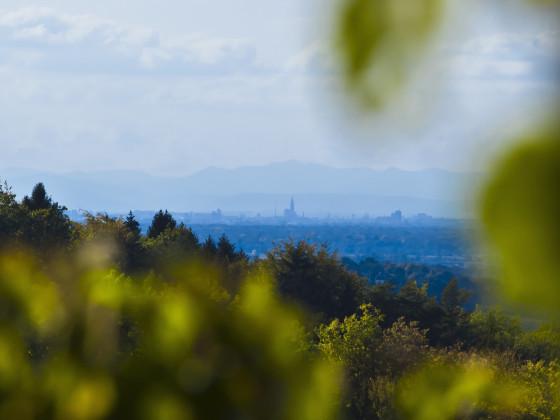 Straßburger Münster von Sasbachwalden gesehen