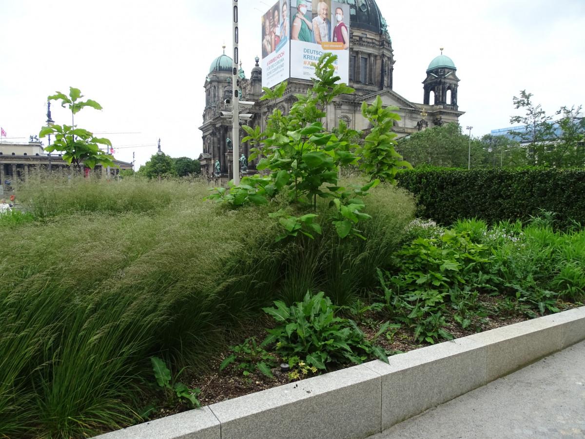 Berliner Schloss 12.6.21