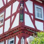 Hainbuche (4)