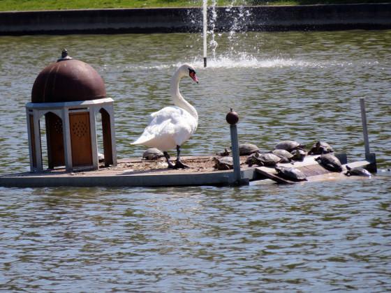 Luisenstädtischer Kanal