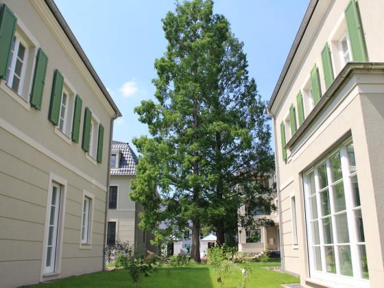 Gartenhof mit Mammutbäumen